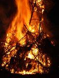 Tree on fire Royalty Free Stock Photography
