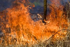 Tree on fire Stock Image