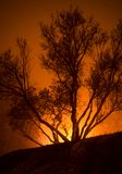 Tree is in fire Royalty Free Stock Image