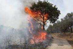 Tree fire royalty free stock photos