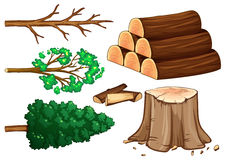 Tree and firewood on white background Royalty Free Stock Images