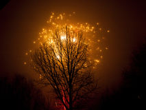 Tree and Firework Stock Photo