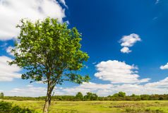 Tree with flat landscape, blue sky clouds. Royalty Free Stock Photo