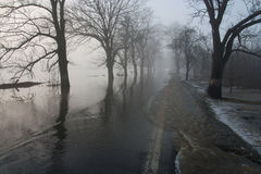 Tree in flood. In Pilsen Czech republic stock images
