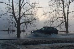 Tree in flood. In Pilsen Czech republic stock photo