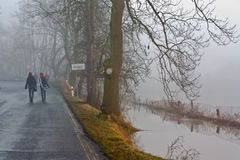 Tree in flood. In Pilsen Czech republic stock photography