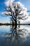 Tree in flooded field Royalty Free Stock Image