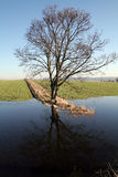 Tree in flooded field Royalty Free Stock Photography