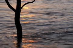 Tree in a flooded river foreland, Deventer, The Netherlands. A lonely tree in a flooded river foreland in Deventer, The Netherlands. During the winter sometimes Royalty Free Stock Image