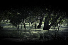 Tree with flooding in swamp Stock Photo