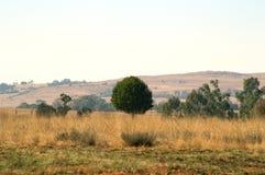 Tree flourishing Royalty Free Stock Photos