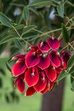 Colorful tree flower royalty free stock photos