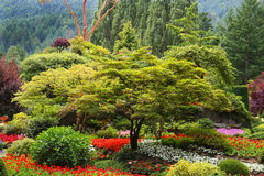 Tree and flower garden Royalty Free Stock Photo