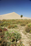 Tree flower nursery and sand dune Royalty Free Stock Image