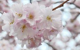 Tree flower Stock Photos