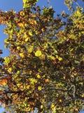 Flower tree royalty free stock photo