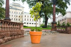 Tree in the flowerpot. In the city stock photos