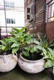 Tree in flowerpot. Tree on flowerpot in the garden stock image