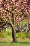 Tree with flowers stock image
