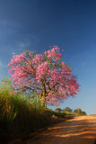 Tree and flowers. A big tree with pink flowers in the field royalty free stock photos