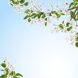 Tree with flowers Royalty Free Stock Images