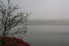 Tree, Flowers and fog on lake royalty free stock images
