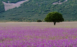 Tree and flowers in the grassland in Cabañeros Stock Photo