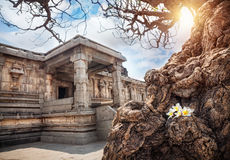 Tree with flowers in Hampi Royalty Free Stock Photos