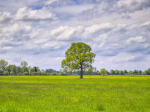 Tree with flowers meadow Royalty Free Stock Photos