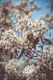 Tree of flowers royalty free stock image