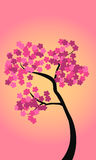 Tree with flowers. Tree with pink flowers on a background of a sunset Stock Images