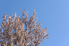 Tree Flowers Spring Blossom Stock Photos