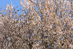 Tree Flowers Spring Blossom Stock Images