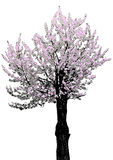Tree with flowers, vector Stock Images