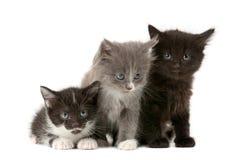 Tree fluffy kittens Royalty Free Stock Photos