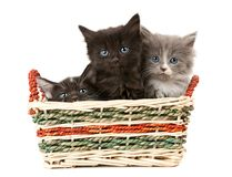 Tree fluffy kittens Stock Photos