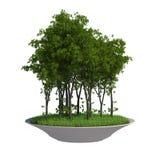 Tree on Fly Island Royalty Free Stock Photo