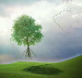 Tree flying away with birds. A tree flying away with a bird flock Royalty Free Stock Images