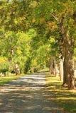 Tree fodrad grusväg Arkivfoto