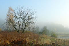 Tree and fog. Tree without foliage and an autumn fog Royalty Free Stock Image