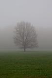Tree at fog Stock Photos