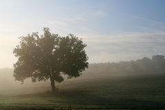 Tree and fog. Landscape with tree and fog Stock Photos