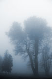 Tree in a fog. Royalty Free Stock Image
