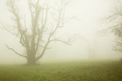 Tree in Fog Stock Photos