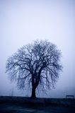 Tree in Fog Royalty Free Stock Photo
