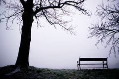 Tree in Fog. A lone tree on a path in the thick fog of winter.  The image is given a blue cast Royalty Free Stock Image