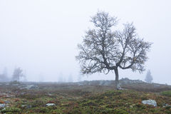 Tree in fog. Lone Tree in autumnal fog Royalty Free Stock Photo
