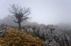 Tree in fog Stock Photo
