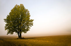 Tree in a fog Royalty Free Stock Images