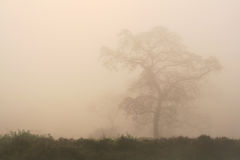 Tree among Fog Royalty Free Stock Photos